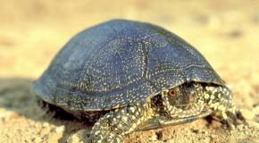 Mocsári teknős túra