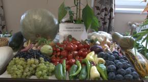 A Kertbarát Kör kiállításának megnyitója a Vörösvári Napokon