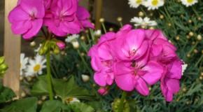 Keresik Solymár legszebb kertjét és erkélyét