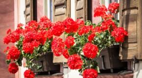 Virágos Solymárért pályázat
